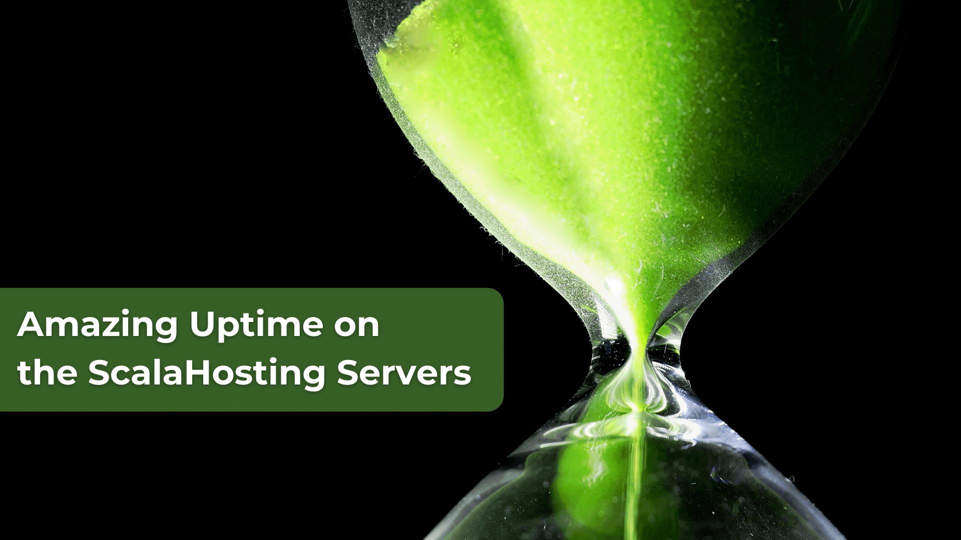 Amazing Uptime on the ScalaHosting Servers