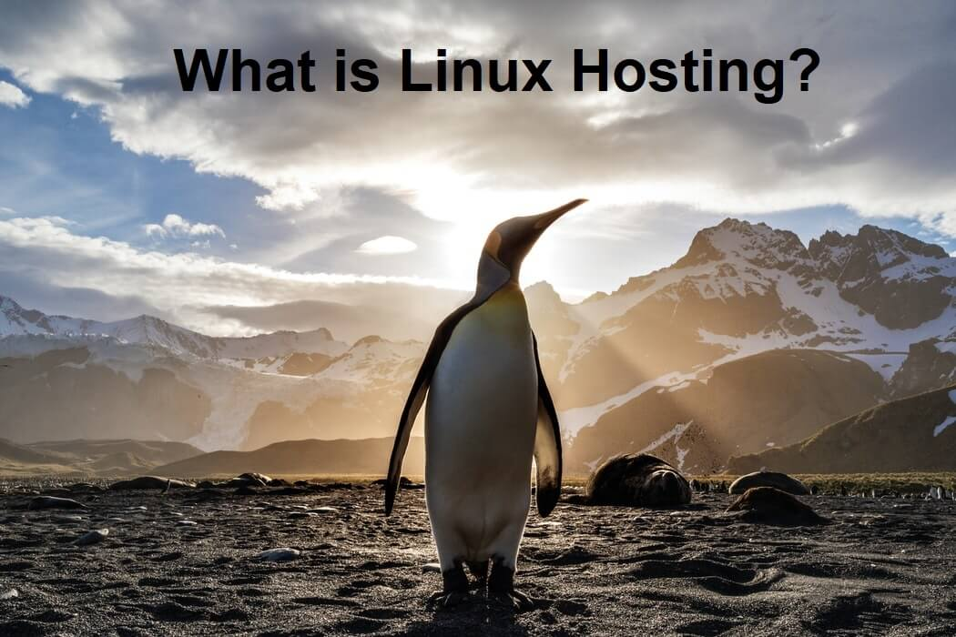 What is Linux Hosting?
